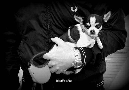 богатая собака