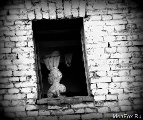 заяц в окне