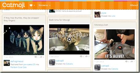 CatMoji.Com– социальная сеть для любителей кошек